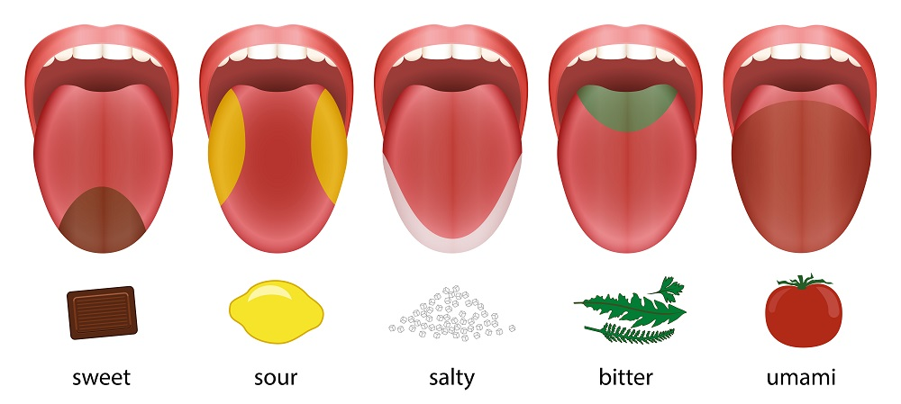 Taste Buds Continue to Work Apart from the Mouth